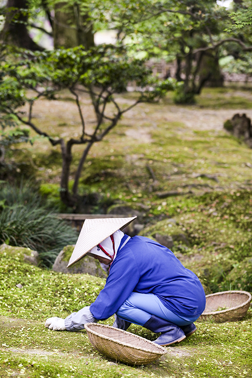 A woman in a conical hat grooming moss in a Japanese Garden